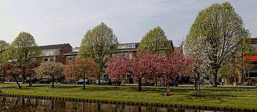 Beschermd stadsgezicht Statensingel Rotterdam in lentepracht van Fons Simons
