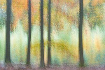 Het schilderachtige bos van Loulou Beavers