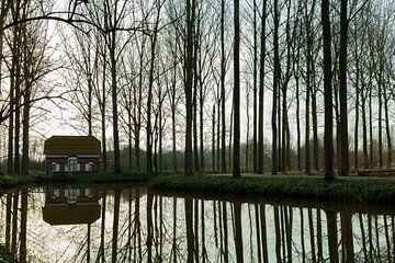 Boomreflecties van Stefan Zwijsen
