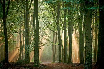 Zonlicht schijnt tussen de bomen van het Speulderbos