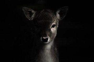 Portraitfoto Hirsche von Blanchette van Hooren