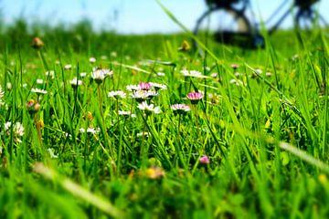 Madeliefjes in het gras sur Marian Klerx