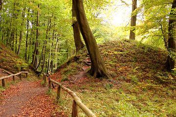 Herbst im Nationalpark Jasmund van Ostsee Bilder