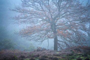 Een koude mistige ochtend op de Kampina