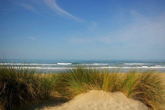 Duin, strand en zee op canvas, aluminium (dibond), Xpozer of poster ...