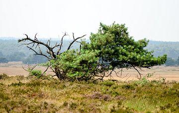 Dode boom in landschap van Annemarie Goudswaard