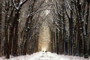 Winter Walk II van