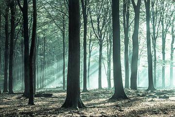Grüne Magie im Speulderbos von Niels Barto
