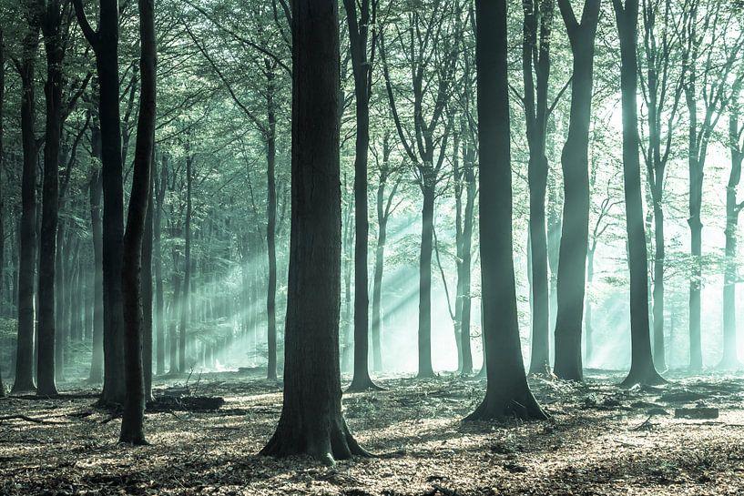 La magie verte dans le Speulderbos sur Niels Barto