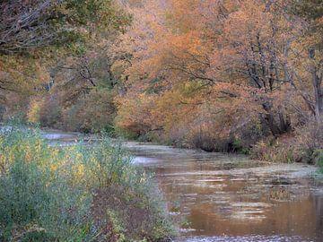 Herfst langs het Linthorst Homankanaal. van Arie Flokstra Natuurfotografie