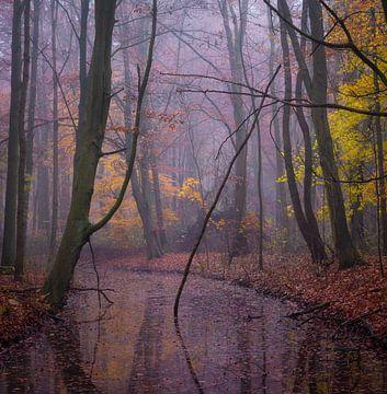 Herfst in het bos van Tomas van der Weijden