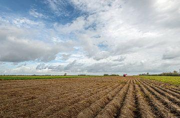 Nederlands agrarisch landschap met lange aardappelruggen van Ruud Morijn