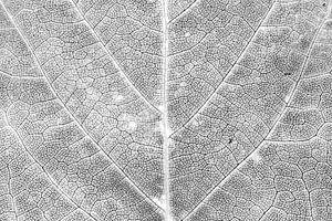 Herfstblad in detail