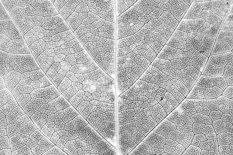 Herfstblad in detail van Carol Thoelen