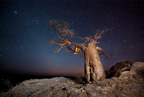 Nachtfoto van een Afrikaanse baobab (Adansonia digitata) tegen een sterrenlucht