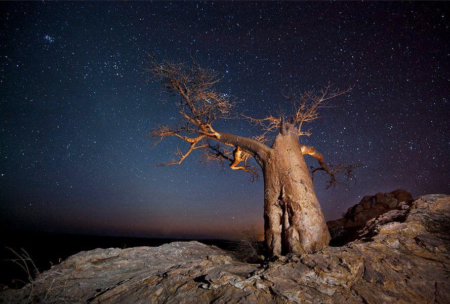 Nachtfoto van een Afrikaanse baobab (Adansonia digitata) tegen een sterrenlucht van Nature in Stock