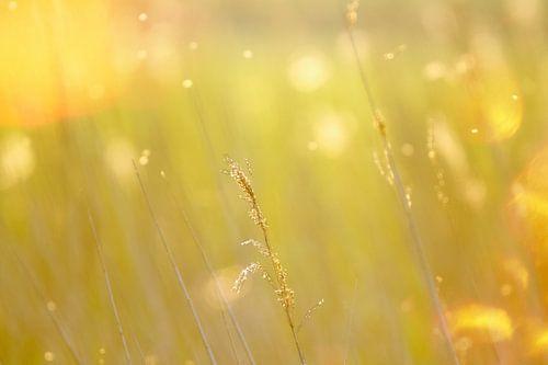 Riet, gouden uur van Wendy Tellier - Vastenhouw