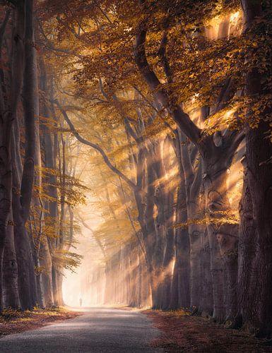 Gouden bomen in de mist