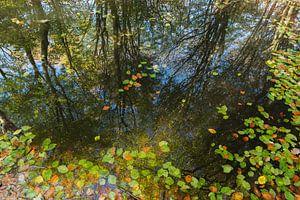 herfstreflecties in het bos
