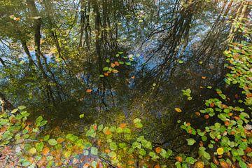 herfstreflecties in het bos van