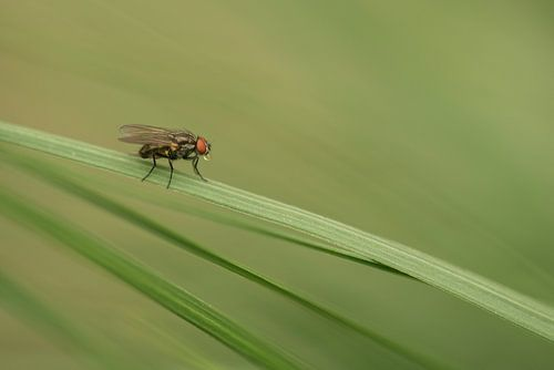 Vliegje in het groene gras van