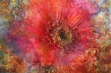 roze Gerbera van Claudia Gründler