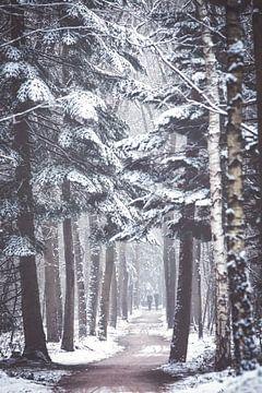 Winters bomen laantje in het Zeisterbos! van Peter Haastrecht, van