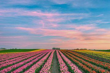 Abends in einem Tulpenfeld am Niederrhein von Michael Valjak