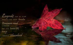 Rood herfstblad van