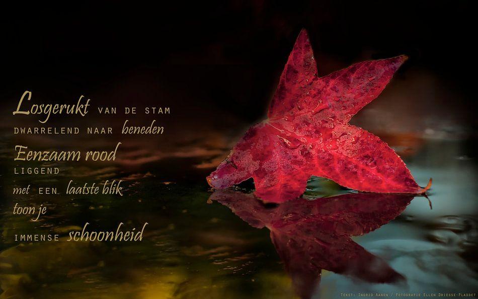 Rood herfstblad van Beeld en Poëzie