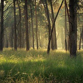 Lost in the Pine Forest van Edwin Mooijaart