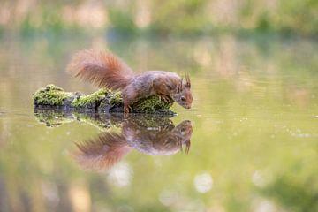 Eekhoorn met reflectie van Gonnie van de Schans