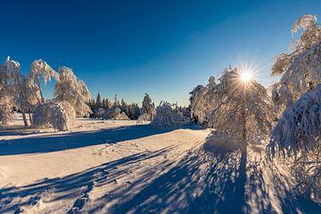 Winterlandschap in het Nationaal Park Zwarte Woud van Werner Dieterich