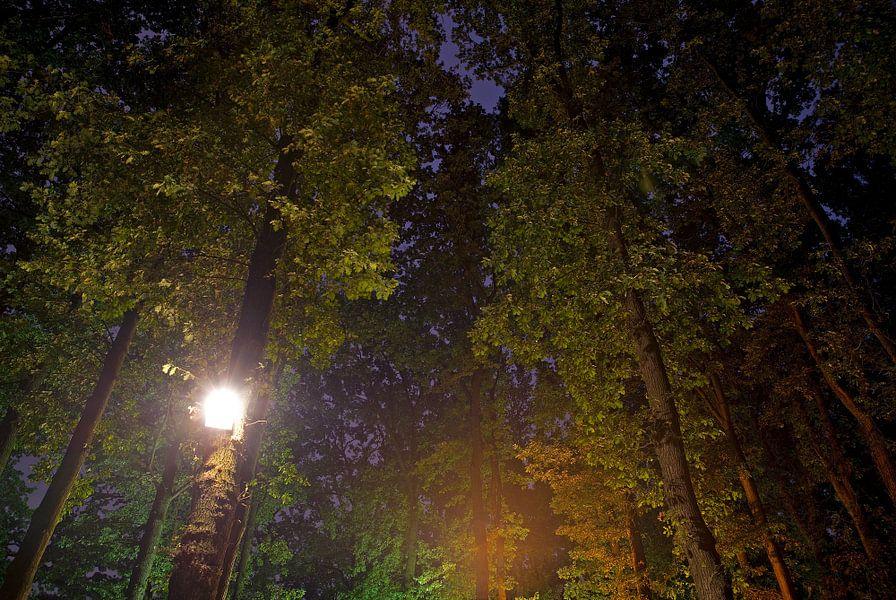 Licht in de toppen van Mariska Hofman