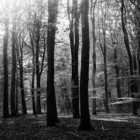 zonnig Speulderbos van Roland Zimmermans
