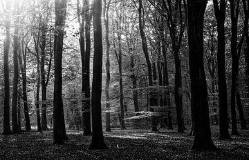 zonnig Speulderbos von Roland Smanski