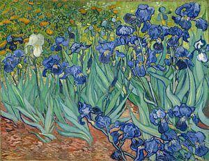 Irissen van Vincent van Gogh van