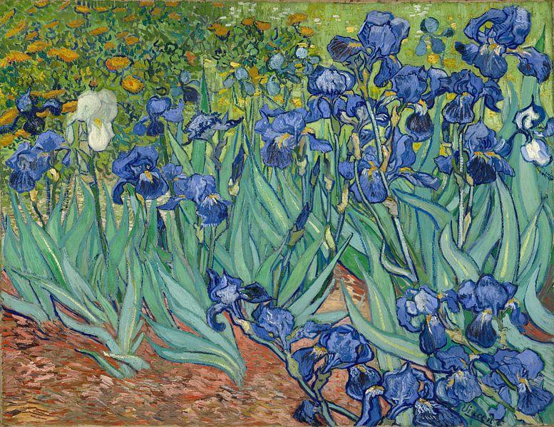 Iris (Schwertlilien), Vincent van Gogh von Schilders Gilde