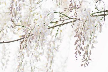 Witte regen van Francis Dost
