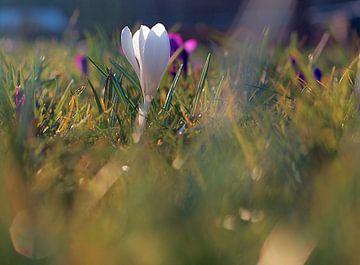 Lente bloemen  van Marianna Pobedimova