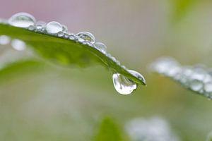 Hangende regendruppel