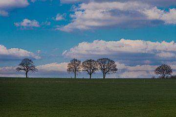 Grüne Wiese mit Bäumen am Horizont im Frühling in Mechelen, Limburg von Kim Willems