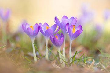 Frühlingsgruß von Daniela Beyer