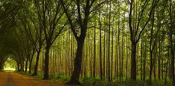 Sfeervol bos in de avond zon van Marjolein van Middelkoop