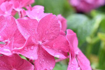 Blume nach einem Sommerregen von Highthorn Photography