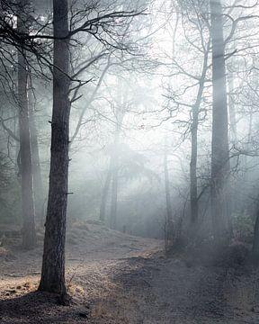 Mysteriöser Wald von Peter Nolten