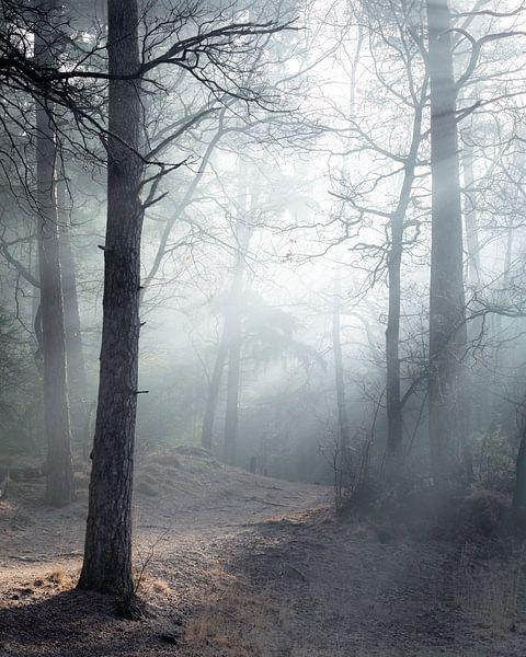 Mysterieus bos van Peter Nolten