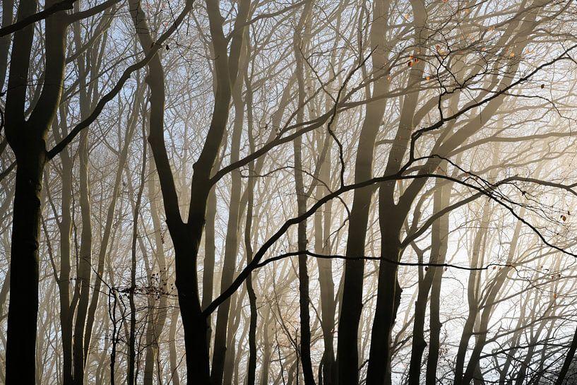 Boomstammen en kale takken als silhouetten in wazig ochtendlicht in een beukenbos, abstracte natuura van Maren Winter