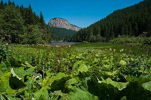 Lacu Rosu (het rode meer) in Roemenië van