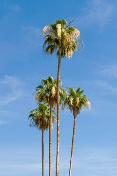 Prachtige palmbomen van Melanie Viola